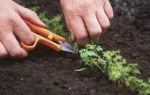 Уход за морковью после посадки в открытый грунт: как его осуществлять правильно, какие меры в него включаются, а также частые ошибки при выращивании корнеплодов