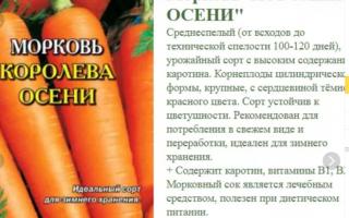 Морковь королева осени: описание и подробная характеристика сорта, инструкция по выращиванию