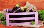 Как хранить баклажаны в домашних условиях правильно и можно ли хранить свежие зиму