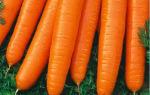 Морковь самсон: что это за сорт, подробное описание и характеристика, фото овоща и советы по выращиванию