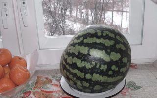 Как хранить дыню в домашних условиях и можно ли сохранить её свежей до нового года