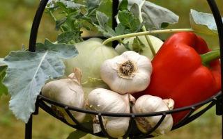 Можно ли при геморрое есть чеснок: польза и вред овоща при этом заболевании, а также пошаговая инструкция по лечению шишек в домашних условиях
