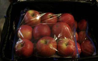 Как сохранить яблоки на зиму свежими в погребе и квартире