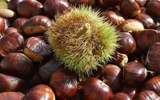 Каштаны: польза и вред, советы по выбору и хранению