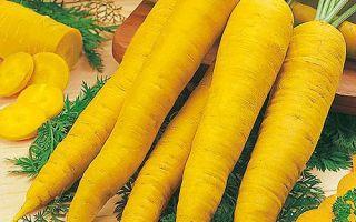 Морковь желтая: что это такое, чем отличается от оранжевой по химическому составу, польза и вред, а также пошаговая инструкция по выращиванию