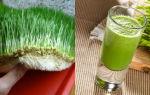 Микрозелень – как вырастить в домашних условиях, польза и вред