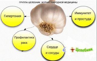 Как влияет чеснок на сердце: может ли оно болеть,пользаи вред этого овоща для здоровья и главного органа человека