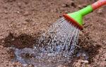 Как часто поливать морковь в открытом грунте в жару летом: особенности орошения в июле, нужно ли его производить после дождя, а также советы по грамотной организации