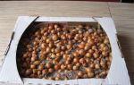 Как правильно хранить лук севок в домашних условиях до весны