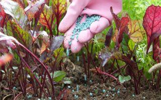 """Чем подкормить морковь в июле для роста: как удобрять корнеплоды в этом месяце органикой и """"минералкой"""", когда лучше всего поливать ими растение"""