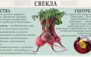 Свекла при беременности: можно ли есть на ранних и поздних сроках, польза и вред вареного и сырого овоща, а также инструкция как употреблять