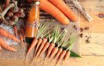 Польза моркови для женщин: чем этот корнеплод может помочь организму, а также лечебные и косметологические рецепты