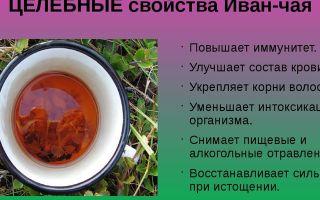 Иван чай – полезные свойства и противопоказания, состав