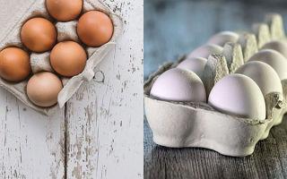 Чем отличаются белые яйца от коричневых и какие полезнее